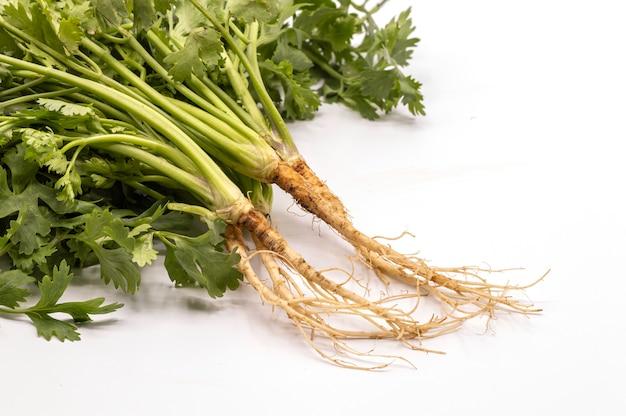 Sluit omhoog verse geïsoleerde korianderwortels Premium Foto