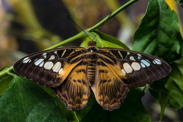 Sluit omhoog vlinder met geopende vleugels Gratis Foto