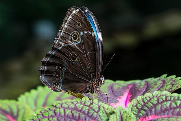 Sluit omhoog vlinder op kleurrijke bladeren Gratis Foto
