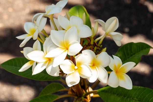 Sluit omhoog witte en gele exotische bloemen Gratis Foto