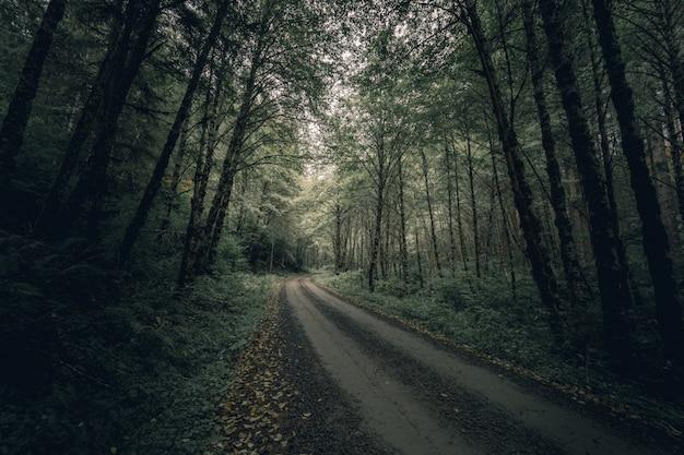 Smal modderig bospad omgeven door dikke bomen en groen overdag Gratis Foto