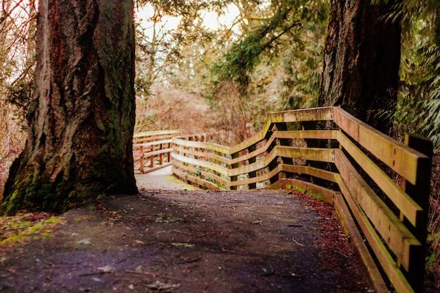 Smalle weg in een bos met een houten plank hek Gratis Foto