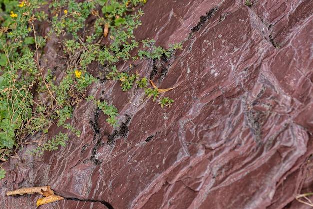 Smaragdgroene bergbeek stroomt door een rode stenen kloof in de franse wildernis. Premium Foto