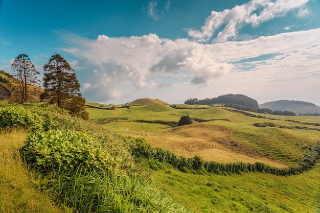Smaragdgroene heuvels van eiland san miguel. azoren. portugal Premium Foto
