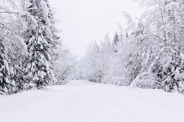 Sneeuwweg in de winter bos, mooi ijzig wit landschap, rusland Premium Foto