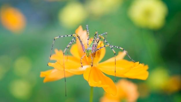 Spinmacro op de bloem op aard groene achtergrond - sluit omhoog mooie en kleurrijke spin vreemde zeldzaam Premium Foto