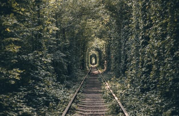 Spoortunnel van bomen en struiken, tunnel van liefde Gratis Foto