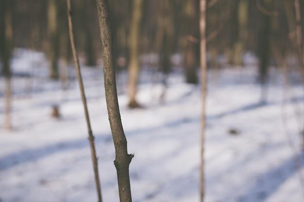 Stam van een jonge boom in het bos tijdens de winter Gratis Foto