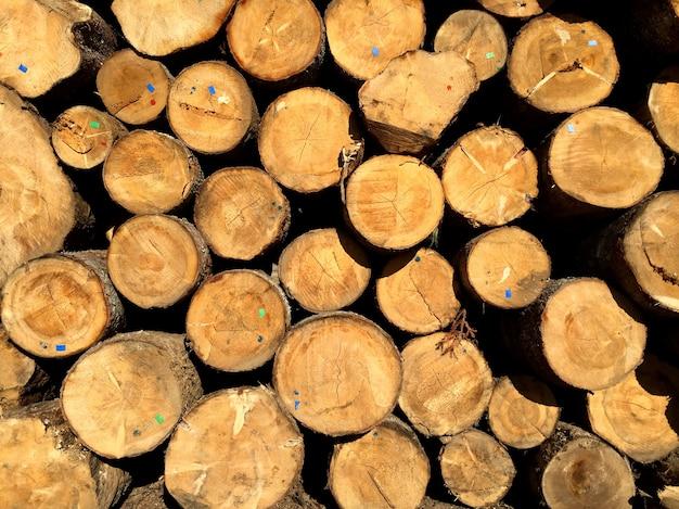 Stapel dennenblokken klaar om in planken te zagen in de houtverwerkende industrie Gratis Foto