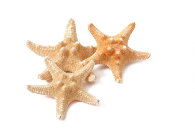 Starfish geïsoleerd Gratis Foto