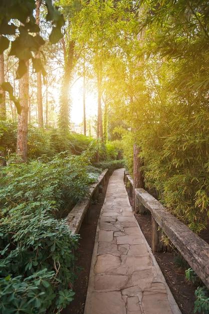Steeg onder wilde planten bij zonsondergang Premium Foto