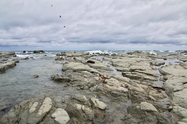 Stille oceaan, kaikoura, nieuw-zeeland Premium Foto