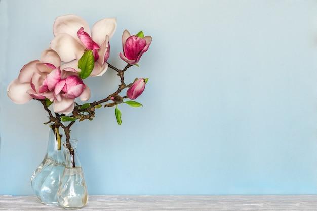 Stilleven met prachtige lente magnolia bloemen in vaas op blauwe copyspace. natuur concept Premium Foto