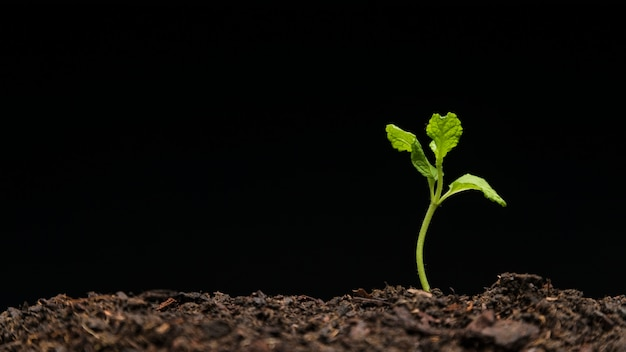 Stilleven van groeiende zaailing Gratis Foto