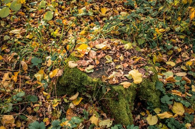 Stomp bosbladeren Premium Foto