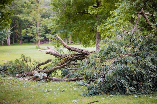 Stormschade gebroken na orkaanstorm gevallen boom een storm. Premium Foto