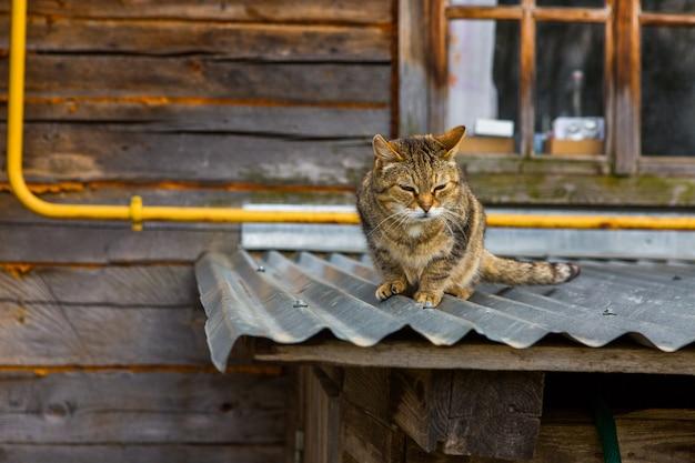 Straatkat op een dak in het dorp Premium Foto