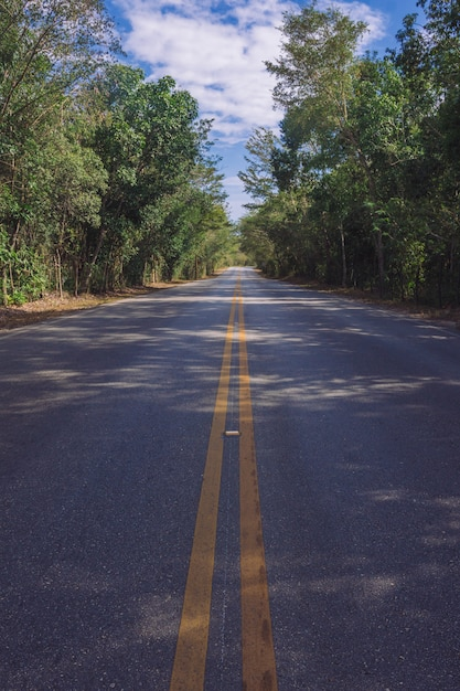 Straatlijn in het bos Premium Foto