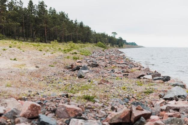Strand met bos op de achtergrond Gratis Foto