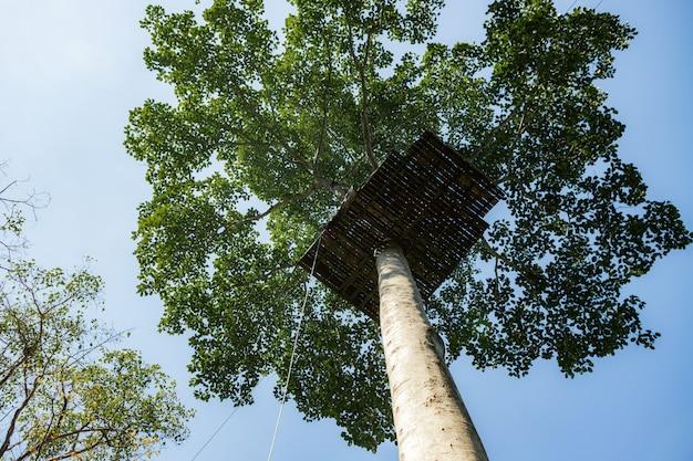 Structuur op een boom Premium Foto