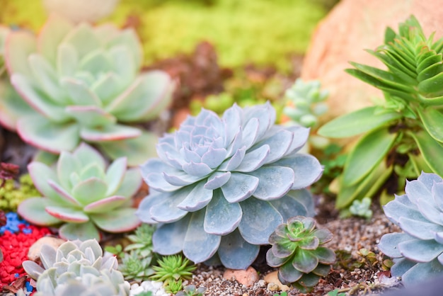 Succulente installatie verschillende soorten mooi groeiend in de tuin Premium Foto