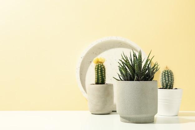 Succulenten en marmeren lade op witte tafel. kamerplanten Premium Foto