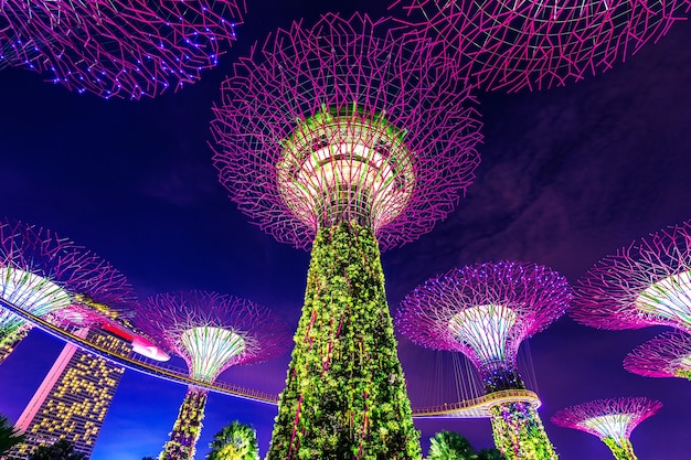Superboom in garden by the bay Gratis Foto