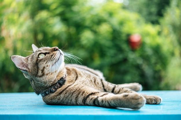 Tabby slaap op een blauwe cementvloer en hierboven kijkend Gratis Foto