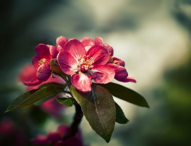 Tak met lente bloemen bloeit Premium Foto