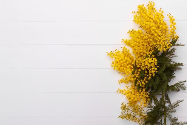 Tak van de lente-mimosa Premium Foto