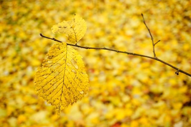 Tak van een geel droog blad omringd door vele anderen op de grond Gratis Foto
