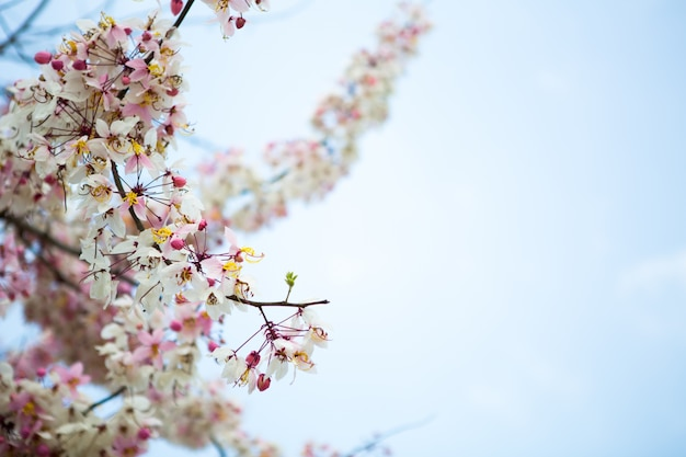 Tak van mooie roze bloem Gratis Foto