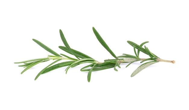 Takje verse rozemarijn die op witte achtergrond wordt geïsoleerd. rozemarijn tak Premium Foto