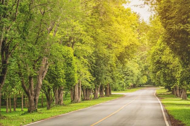 Tamarindeboom met twee kanten van de weg Premium Foto