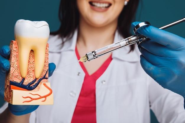 Tandarts die toont hoe anesthesie op het tandmodel moet worden uitgevoerd. Premium Foto