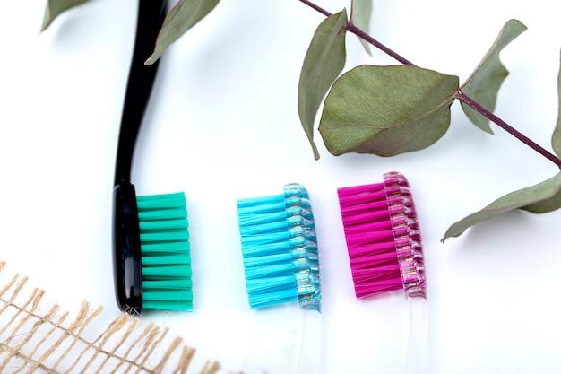 Tandenborstels en een tak van eucalyptus op een witte achtergrond. Premium Foto