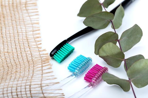 Tandenborstels van verschillende kleuren en een tak van eucalyptus op een witte achtergrond. Premium Foto