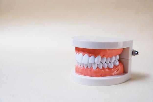 Tandenmodel, leermiddelen Premium Foto