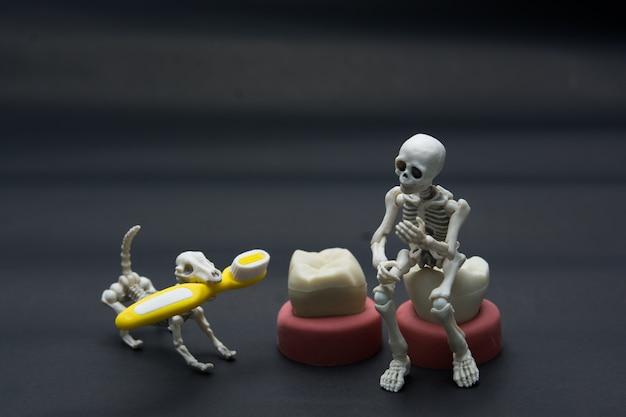 Tandenmodellen van verschillende menselijke kaken met skelet en hond, halloween-tandenconcept. Premium Foto