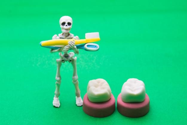 Tandenmodellen van verschillende menselijke kaken met skelet, halloween-tandenconcept. Premium Foto