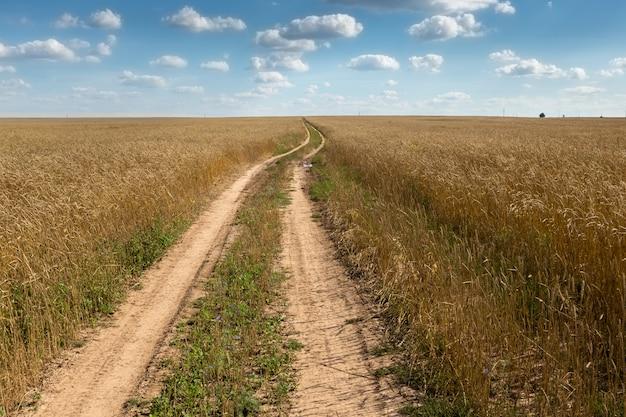 Tarweveld met een weg Premium Foto