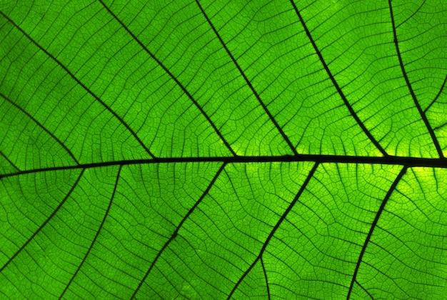 Teak bladeren textuur Premium Foto