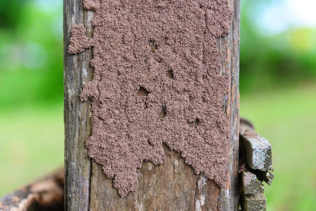 Termieten op de stronk, termietennest op een houten paal beschadigd door insectendier Premium Foto