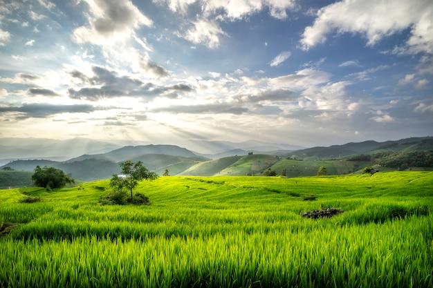 Terrassenpadievelden op berg in thailand Premium Foto