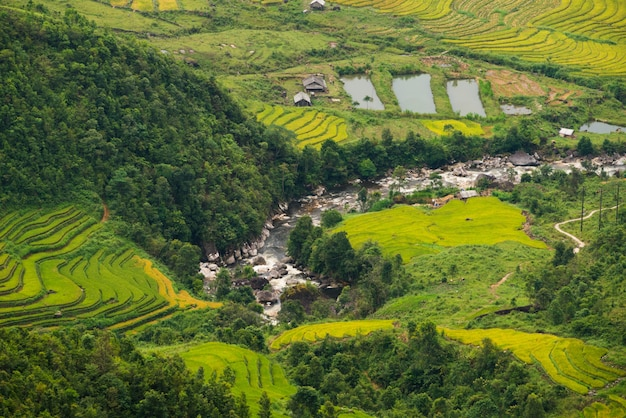 Terrasvormig padieveld in mu cang chai, vietnam Premium Foto