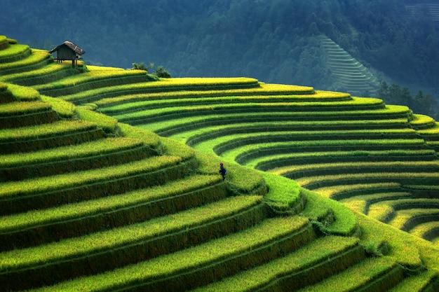 Terrasvormige rijstaanplanting in mu cang chai, vietnam. aanplanting van de landschaps de terrasvormige rijst in vietnam. mu cang chai-rijstaanplanting strekt zich uit over berghellingen in vietnam. vietnam plantage landschap. Premium Foto