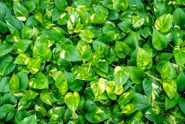 Textuur van bladeren van planten Gratis Foto