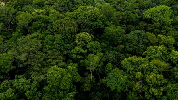 Textuur van bosachtergrond Premium Foto