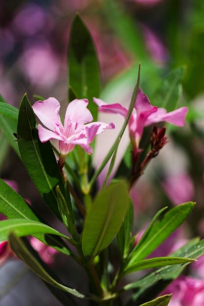 Textuur van dichte omhooggaande bloemen Gratis Foto