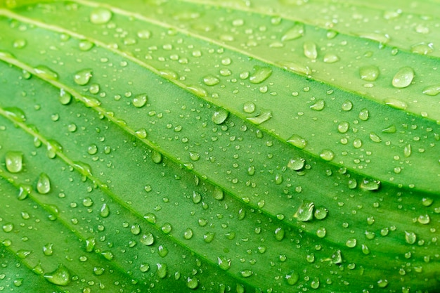 Textuur van het close-up de groene blad met regendruppel. verse natuur achtergrond. Premium Foto